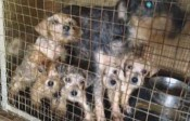 puppy mills crppd